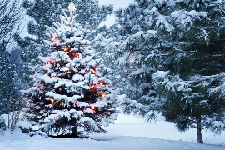 5 Start-ups, die schicke Weihnachtsbäume verkaufen