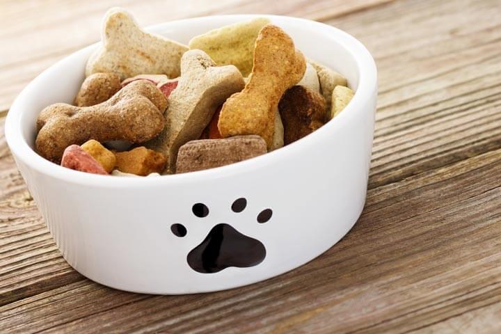 Millionenspritze für Hundesnacks aus Insekten