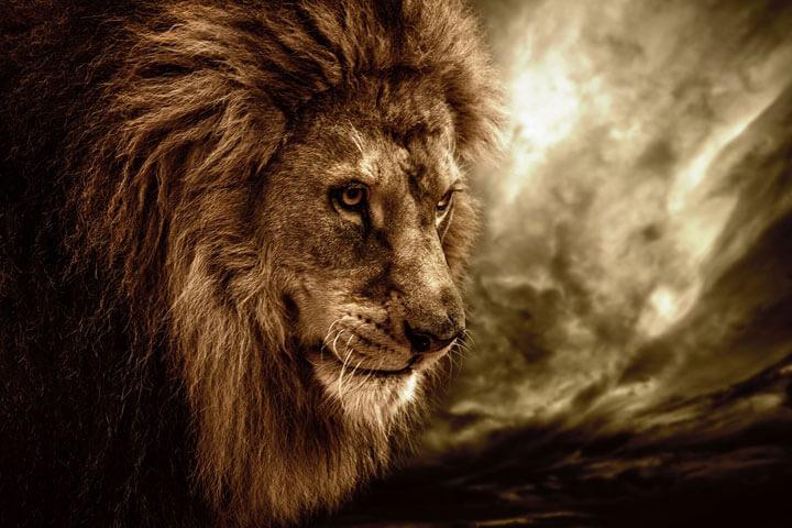 Das ultimative 'Die Höhle der Löwen'-Bullshit-Bingo