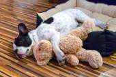 Wie niedlich: Ein Blog nur für Startup-Hunde