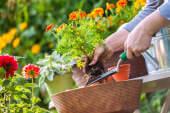 Ein Startup, das Pflanzen rettet und Investoren begeistert
