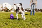 Hundewunderbox scheitert, Mauz & Wauz expandiert