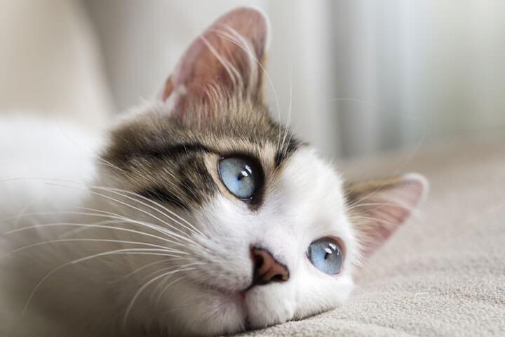 Katzenbilder für Gründer und andere Startupper