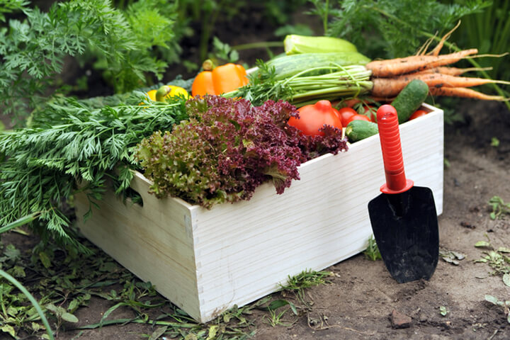 Lecker! 100 Millionen-Investment in frisches Gemüse
