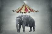 8 kleine Elefanten, die nun fliegen lernen sollen