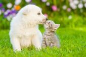 Digitaler Tier-Doc bekommt Millionensumme – Alle Deals des Tages