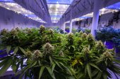 #EXKLUSIV Rocket gründet Cannabis-Startup Acanyo Medical