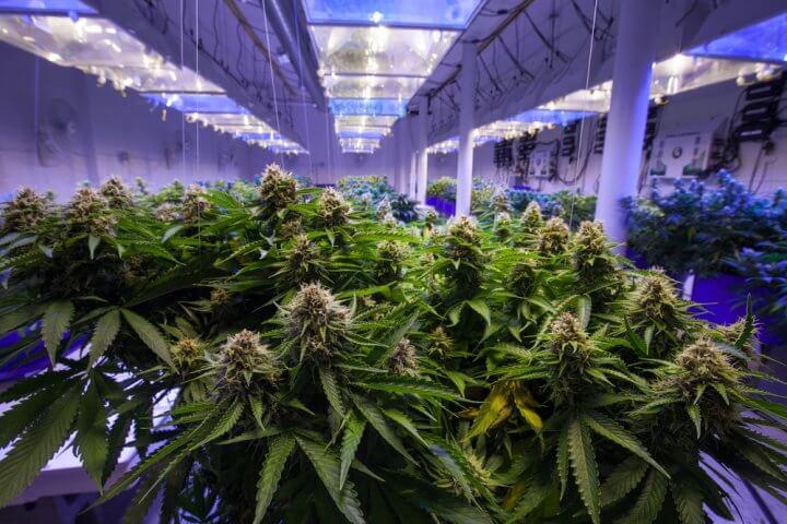 Kölner Cannabis-Startup bekommt 15 Millionen