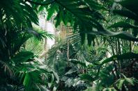 #EXLUSIV – Siebenstelliges Investment für digitalen Pflanzendoc Plantix – Alle Deals des Tages