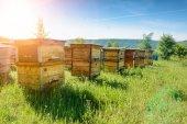 apronex verhilft Biene Maja zu einem sicheren Leben