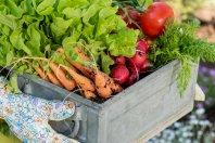 12 neue (und leckere) Food-Startups, die man kennen sollte