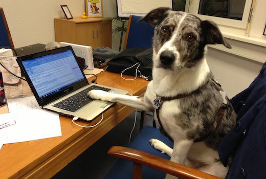 Haustiere im Büro: Kollege Hund und Katze