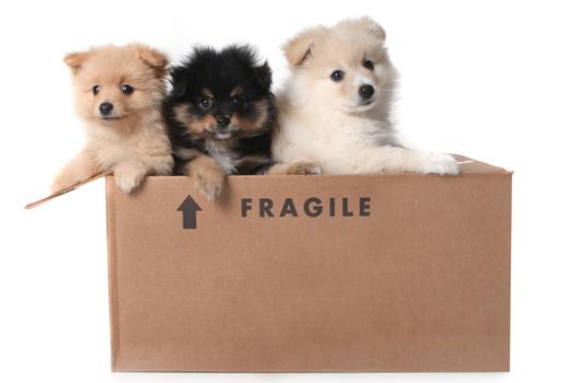Hundewunderbox und Mauz & Wauz eifern BarkBox nach