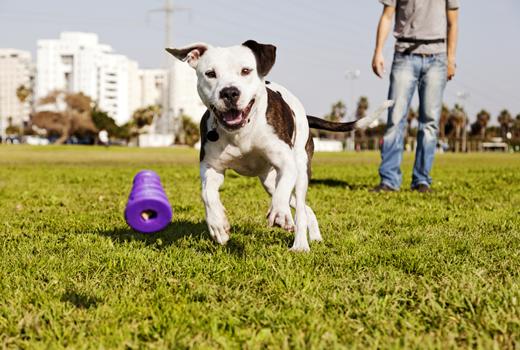 Nicht nachmachen! Es gibt genug Abo-Boxen für Hunde