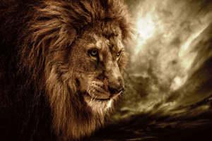 Die Höhle der Löwen kommt im September zurück