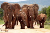 Project Flying Elephant hat ein Herz für deutsche Techies