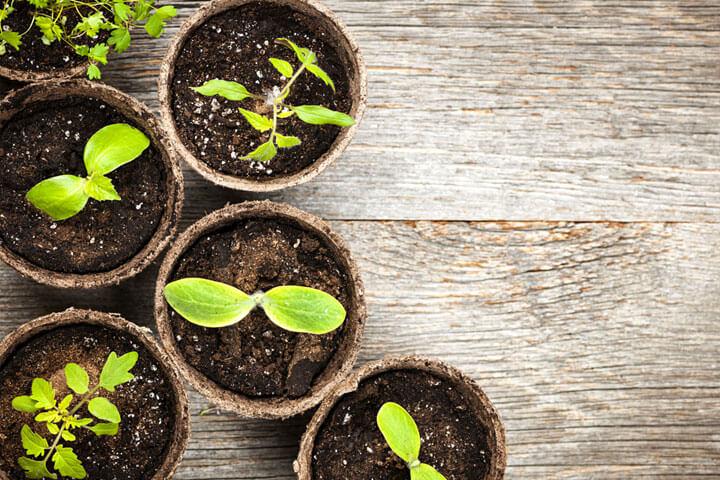 Nachhaltigkeit als Wettbewerbsvorteil für Start-ups