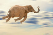 Talentwunder will mit Project Flying Elephant abheben
