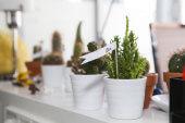 Mein kleiner grüner Kaktus steht draußen am Balkon