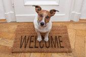 Fachverlag übernimmt Netzwerk für Hundehalter
