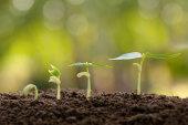 5 budgetschonende Seeding-Tipps für Startups