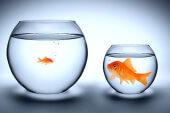 Startups und Corporates: Immer wieder ein Fiasko