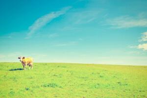 Gründen in der Provinz: Personalstrategien für Start-ups