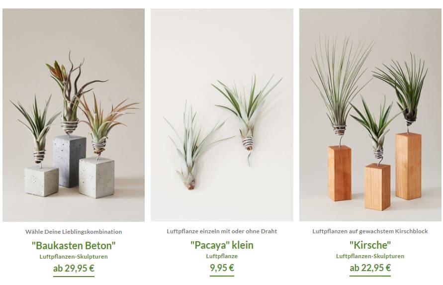 evrgreen_pflanzen