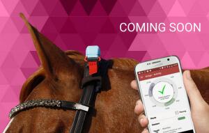 HorseAnalytics – ein Whatsapp für Pferd und Reiter