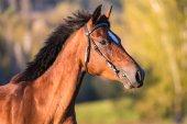 Riderr – Community und Branchenbuch für Pferdefans