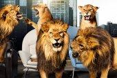 #DHDL – Alles, was man über die neue Staffel wissen muss